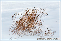 Roadside Weeds in Snow (ctofcsco) Tags: park city winter usa snow plant nature contrast canon landscape geotagged weeds colorado unitedstates outdoor wildlife 110 gardenofthegods explore telephoto coloradosprings co northamerica 5d f11 1500 gleneyrie 2016 superzoom 250mm eos5d explored 35350mm ef35350mm ef35350mmf3556lusm ef353503556lusm 5dclassic 5dmark1 5dmarki gardenofgodscom wwwgardenofgodscom geo:lat=3887317440 geo:lon=10488632790