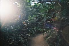 *** (Justin Wolfe) Tags: winter urban canada color classic film nature analog 35mm canon vintage dark winnipeg kodak conservatory minimal manitoba flashback greenhouse jungle 35mmfilm analogue simple cinematic timeless urbanphotography urbex ektar filmphotography canonf1 kodakektar100