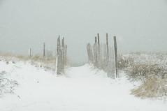 DSC_0852 (Putneypics) Tags: winter snow storm coast capecod falmouth northeast surfdrive putneypics
