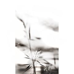 S u b e s p a c i o s   5 (creonte05) Tags: chile blackandwhite bw naturaleza detalle nature nikon flickr explore backlighting bconegro d7100