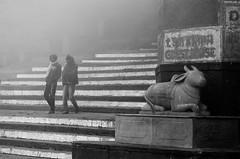 Foggy ghats (1/4th) Tags: street blackandwhite bw india mist monochrome fog nikon steps varanasi nikkor kashi ghats banaras benaras cwc uttarpradesh  varanasighats  2470mmf28g nikon2470mmf28 d7000 chennaiweekendclickers foggyghats cwc384
