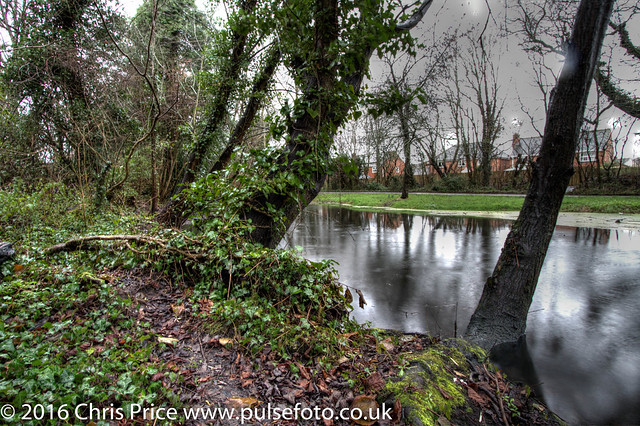 Lane End Pond, Bramley
