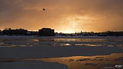a fiery sunrise over Sydney (Rob Romard) Tags: ocean winter sunrise town atlantic fiery
