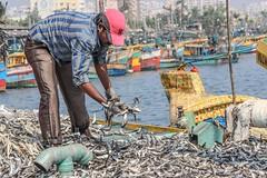 fishing harbour (aviky2k) Tags: morning beautiful bay fishing many business trawler vizag visakhapatnam seafish