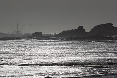 IMG_7496 (armadil) Tags: beach waves surfer wave beaches surfers mavericks bigwaves californiabeaches