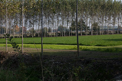 alberi a distanze diverse (Clay Bass) Tags: trees light green 50mm natural canon5d savigliano