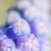 la goutte bleue