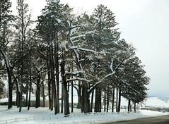 March Snow (wyojones) Tags: trees winter snow wyoming np winterstorm lander marchsnow wyojones wyomingliferesourcecenter