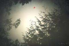 Escape.. (Stella_Kar) Tags: trees sky texture composition escape branches air digitalart balloon fantasy imagination dreamer letitgo