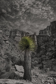 Green Cactus, Old Ore Road, Big Bend National Park, Texas - Filename: XR6A2342-Edit - 1/40 sec at f/18 ISO 100