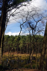 25.3.16 Delamere Forest 25 (donald judge) Tags: trees water forest countryside cheshire mere delamere