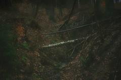 nikon_d90_10.04.16_02 (iiyyyii) Tags: wood mist plant tree fog forest landscape mood gloomy outdoor gully nikond90 nikkor35mmf18