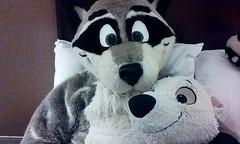 Umm... bed fursuit selfie time (Morton Fox) Tags: furry va convention sheraton fursuit tysonscorner fursuiting furthemore