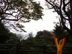 Moltres in Yokosuka, Kanagawa 22 (Kannonzaki park) (Kasadera) Tags: toys figure pokemon pokémon yokosuka 横須賀 神奇寶貝 ポケモン lavados 観音崎公園 moltres 火鳥 ファイヤー pokemonkids 寵物小精靈 파이어 kannonzakipark sulfura ポケモンキッズ 火焰鳥
