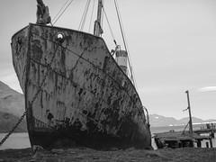 DSC03498 (peng_tim1) Tags: antarctica whale wal antarctic petrel anartikis