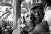 Frisbee and Daisy (petewatson) Tags: friends portrait dogs faces elderly older closeups