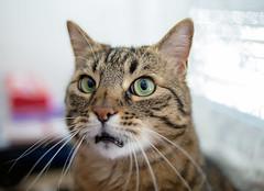 Oooh noo!! No whiskas today? Really? (Matja Skrinar) Tags: 100v10f