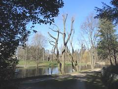 Im Volkspark Mariendorf, Berlin, NGID1375713278 (naturgucker.de) Tags: naturguckerde cwolfgangkatz 915119198 92636685 865714930 ngid1375713278
