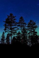 Reaching For The Stars (T. Kristensen) Tags: blue trees norway night stars lights spring aqua no aurora tall northern akershus borealis nordlys eidsvoll 500px gullverket ifttt