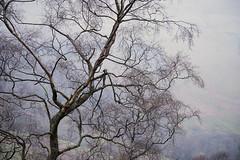 Keld Yorkshire 24/04/2016 (Matthew Dartford) Tags: tree branch branches yorkshire creepy telephoto trunk yorkshiredales happisburgh