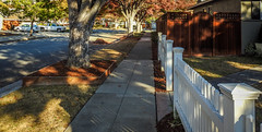 Happy Fence Friday (randyherring) Tags: california ca street autumn trees shadow red orange house green cars nature colors grass leaves fence us afternoon unitedstates outdoor relaxing sanjose sidewalk shade shady