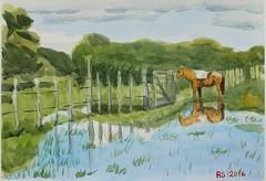 DSCF7274_low (RafaelSan) Tags: horse watercolor criollo caballo acuarela gaucho