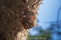 Argentinien_Insekten-93 (fotolulu2012) Tags: tierfoto