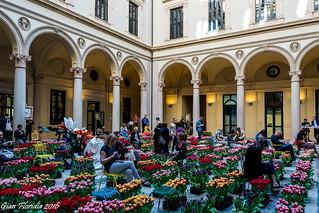 15000 tulipani dall'Olanda a Milano, Palazzo Turati