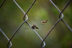 Bees (jbanistaok50) Tags: pictures color nature amazing day photos like dia explore pict wonderfull gorgeus inexplore