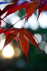 A moment of Zen (James_D_Images) Tags: sunset red sun leaves garden bokeh peaceful japanesemaple backlit