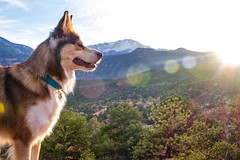 Garden of the Gods (Rudy Meadows Photography) Tags: trees sunset dog pet snow mountains nature animals garden one amazing husky colorado hiking seat adventure explore gods eyed siberian exploration jace adventuredog theredking jacethehusky jacethered oneeyedhusky