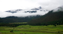 Morning fog clouds mountains (C. Alice) Tags: 川藏318之旅 中國 china 西藏 tibet 四川 sichuan 2015 sony morning nex5r green clouds summer favorites30 sonyepz1650mmf3556oss sonynex5r ngc travel asia beautifulearth favorites60 1000v40f favorites100 aatvl01 aatvl02 100commentgroup 3000v120f 3000views aatvl03 favorites150