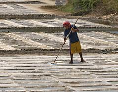 Salt Farming (Beegee49) Tags: farm philippines farming salt m bago