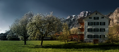 Berschis (Elliott Bignell) Tags: trees mountain mountains alps apple berg schweiz switzerland spring suisse blossom ostschweiz berge alpine bloom blossoming blooms alpen svizzera alp apfel frhling blten walenstadt berschis apfelbume blht