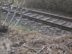 Reste Gterstrecke Teltow 2016 - 38 (Abandoned-Stillgelegt Berlin) Tags: railroad trees tree abandoned train germany deutschland bush track tracks railway bushes bume brandenburg baum gleise busch ballast gleis bahnstrecke stillgelegt trackbed teltow bahndamm schotter schwellen bsche b landbrandenburg betonschwellen bahnbergnge holzschwellen betonschwelle holzschwelle altebahnstrecke gterstrecke stadtteltow ehemaligegterstrecke ehemaligebahnstrecke