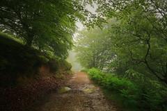 NIEBLA EN PRIMAVERA (carrerasjordi) Tags: paisajes de valle caminos bosques hayedo nieblas baztan