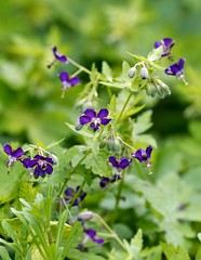 Spring 2016 - 807 LBG (Lostash) Tags: life flowers plants nature spring flora seasons