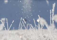 Diamond dust (Tracey Rennie) Tags: winter sunlight white snow cold ice glitter frost magic freezing alberta spinning grasses icecrystals cochrane diamonddust snowfairies