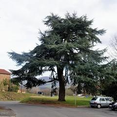 Saint-Laurent de Chamousset (Rhne) (Cletus Awreetus) Tags: france rhne arbre montsdulyonnais cdre stlaurentdechamousset