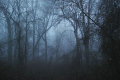 blue december (wood_owl) Tags: morning blue trees ohio mist nature forest vines woods december mood atmospheric nosnow thicket favoriteplaces longeared sooc munroefallsmetropark asilence noowls
