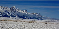 Teton Mountain Range (Stanley Wood) Tags: elk teton nationalelkrefuge jacksonholewyoming
