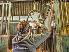 P1290078 (gill4kleuren - 11 ml views) Tags: horses dentist haflinger tandarts 2015 hengst