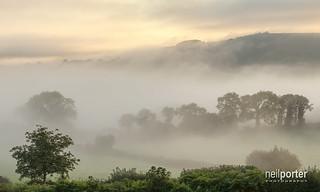 Dartmoor's Rainforest