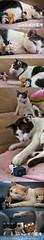 Nyanbo series (= ann =) Tags: cat toy photostory yotsuba danbo danboard nyanboard