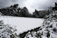 2016-01-24  (Steven Weng) Tags: snow canon taiwan taipei     yangmingshan  eosm