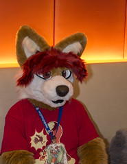 DSC_1929 (Acrufox) Tags: midwest furfest 2014 furry convention december hyatt regency ohare rosemont chicago illinois acrufox fursuit fursuiting mff2014