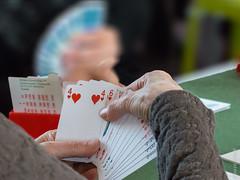"""Une passion  """"le bridge"""" (beatricedrevon) Tags: cartes jeux jeudecartesbridge"""