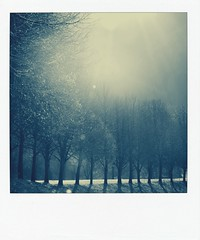 collect moments (p.m. m.) Tags: morning trees winter sun sunlight home polaroid outside nikon moments natur