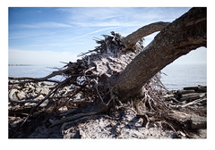 Driftwood (FranceFoto_) Tags: color nature 35mm canon outside book natural sunny places nopeople driftwood frame jekyll whereivebeen photoseries