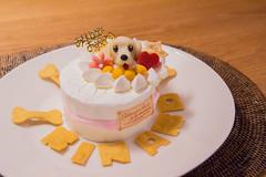 IMG_4187 (yukichinoko) Tags: birthday dog dachshund 犬 kinako ダックスフント ダックスフンド きなこ
